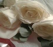 canada whiterose