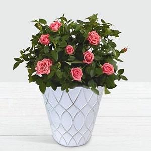 Birthday Flowers gift from Karachi lahore islamabad to usa america newyork washington california illinous