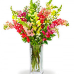 Super-Snapdragons-colorful-bouquet-wedding-birthday-congratulatory-flowers-to-canada-from-pakistan-bl-lf17-10