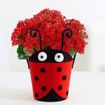 red-love-bug-kalanchoe-plant-gift-karachi-lahore-pakistan-newyork-chicago-pf30046383