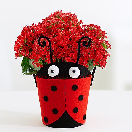 Love bug flowers to USA from Pakistan