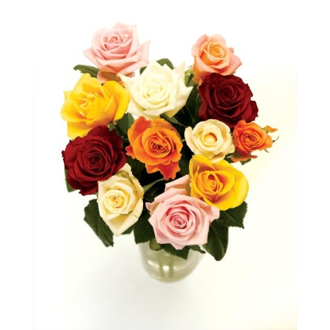 12_mixed_roses To uk From Pakistan