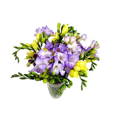 Send Scented Freesia flower To UK