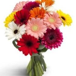Send 12 Mixed Gerberas Bouquet To Saudi Arabia