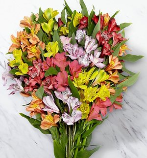 50 Blooms Peruvian Lily Flowers Bouquet To USA From Pakistan