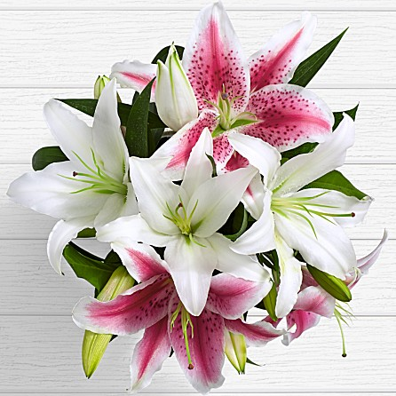 anniversary birthday bud form lilies present gift from Dera Ismail Khan Dera Ghazi Khan Peshawar Mardan to USA