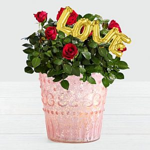 anniversary birthday daily look at well wishes wife mother daughter sister significant other from GRT GWD PK to HI ID USA