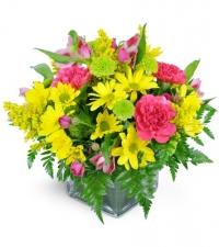 day-at-the-park-Flowers to Toronto, Mississauga, Ontario, Alberta, Calgary, Hamilton, Ottawa, Montreal, Winnipeg allover Canada from Karachi, Lahore, Islamabad Pakistan
