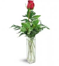 forever-together-single-red-rose-flower-Flowers to Toronto, Mississauga, Ontario, Alberta, Calgary, Hamilton, Ottawa, Montreal, Winnipeg allover Canada from Karachi, Lahore, Islamabad Pakistan