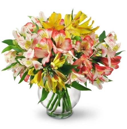 perfect-peruvian-lilies-flowers-Flowers to Toronto, Mississauga, Ontario, Alberta, Calgary, Hamilton, Ottawa, Montreal, Winnipeg allover Canada from Karachi, Lahore, Islamabad Pakistan